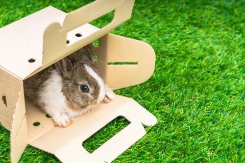 cuánto cuesta una jaula para conejo