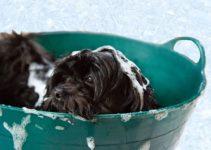 cuanto cuesta bañar a un perro