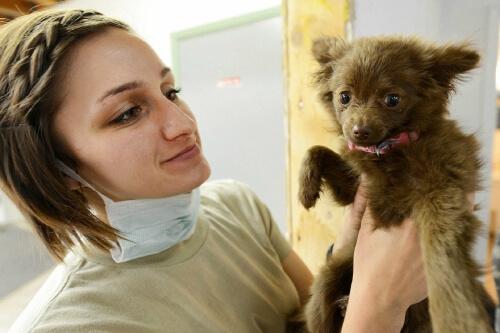 cuanto cuesta la carrera de veterinaria