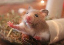 Cuanto cuesta un hamster