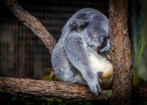 Cuanto cuesta estudiar en Australia