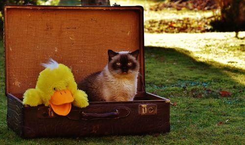 cuanto cuesta viajar con un gato en avion