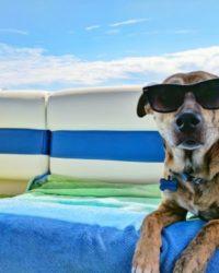 ¿Cuanto Cuesta Viajar Con Un Perro En Avión? Precios 2018
