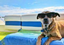 cuanto cuesta viajar con un perro en avion