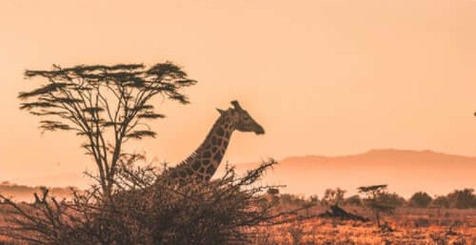 Cuánto cuesta un safari en África